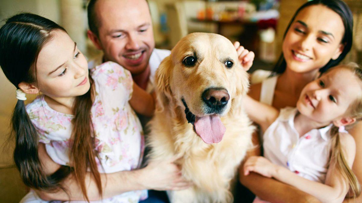 Ребенок и домашние питомцы в семье
